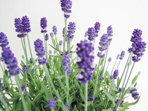 ザ・ガーデンの園芸スタッフブログ